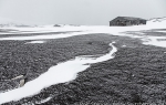 d7_Deception-Island_20Nov13_190