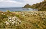 Sandy Bay, Macquarie Island