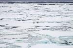 c6_amundsen-sea_21jan15_38