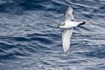 f1_southern-ocean_03feb15_06