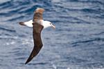 f3_southern-ocean_05feb15_079