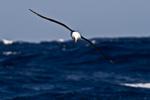 f4_southern-ocean_06feb15_100