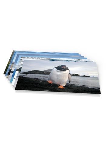 https://www.spitzbergen.de/?page_id=3791