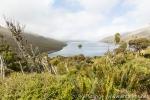 170217_campbell-island_179