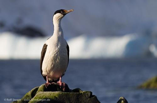 Antarktis 2012