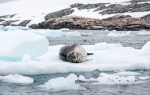 a5_Pleneau-Island_19Jan13_03