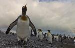 Falkland Islands, South Georgia, Antarctica 04-22 February, 2012