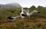 Bird-Island_28Mar09_142