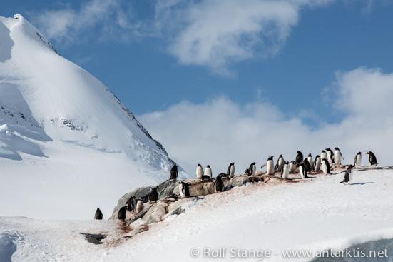 Schnee, Antarktische Halbinsel