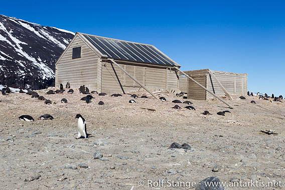 Borchgrevinks Hütte, Kap Adare