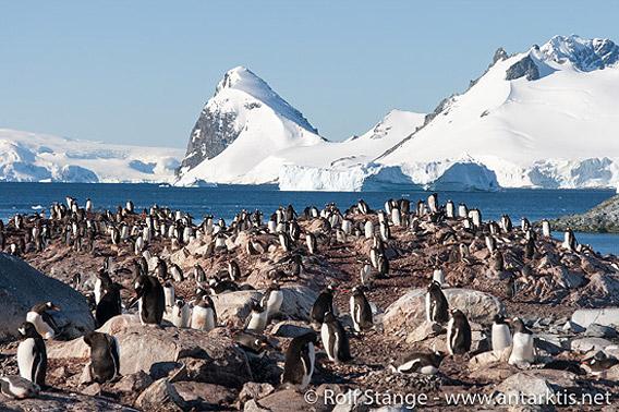 Cuverville Island, Antarktische Halbinsel