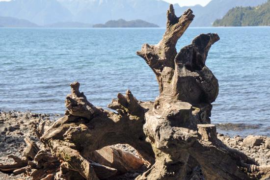 Baumstamm am Ufer einer patagonischen Meerenge