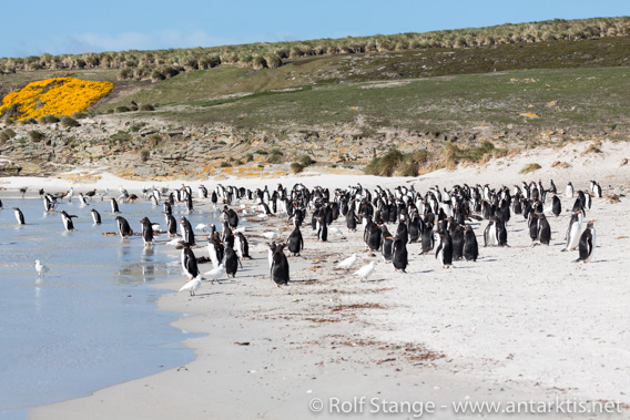 Falkland Islands scenery